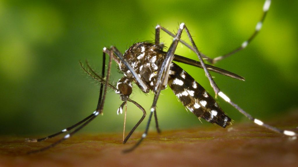 Zika Alert: How to Keep You and Your Loved Ones Safe